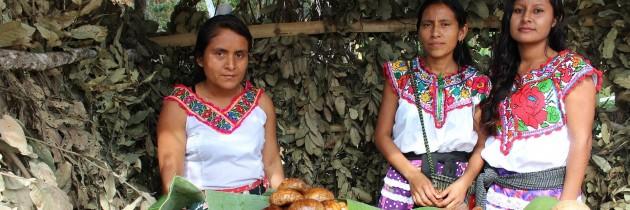 México: Derechos básicos y libertades fundamentales.